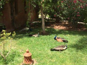 health retreats morocco