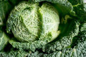 Cabbage Immune Food